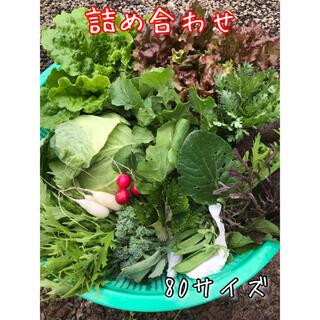 野菜 詰め合わせ 80サイズ 直送(野菜)