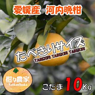 河内晩柑こだま 訳あり10キロ(フルーツ)