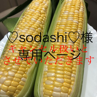 ♡sodashi♡様専用ページ とうもろこし(野菜)