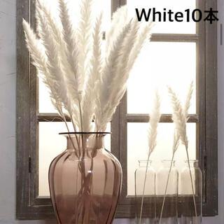 パンパスグラス white 10本(ドライフラワー)