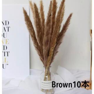 パンパスグラス ブラウン 10本(ドライフラワー)