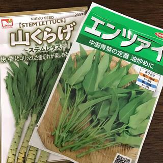 エンツァイと山クラゲの種(野菜)
