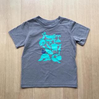 パタゴニア(patagonia)の【記名跡あり】パタゴニア 半袖Tシャツ 12M〜18M 80〜90くらい(Tシャツ)