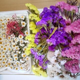 ドライフラワー花かんざし70以上スターチス4色(ドライフラワー)