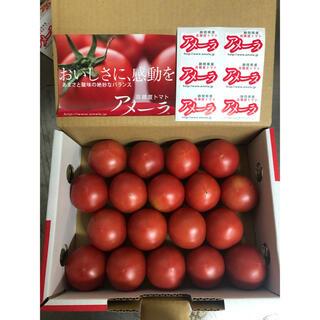静岡県アメーラフルーツトマト18個〜20個(野菜)