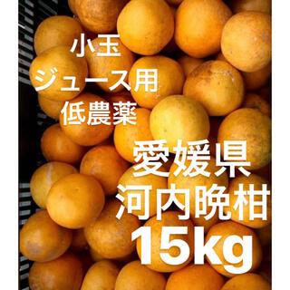 ・愛媛県 低農薬 宇和ゴールド 河内晩柑 ジュース用 15kg(フルーツ)