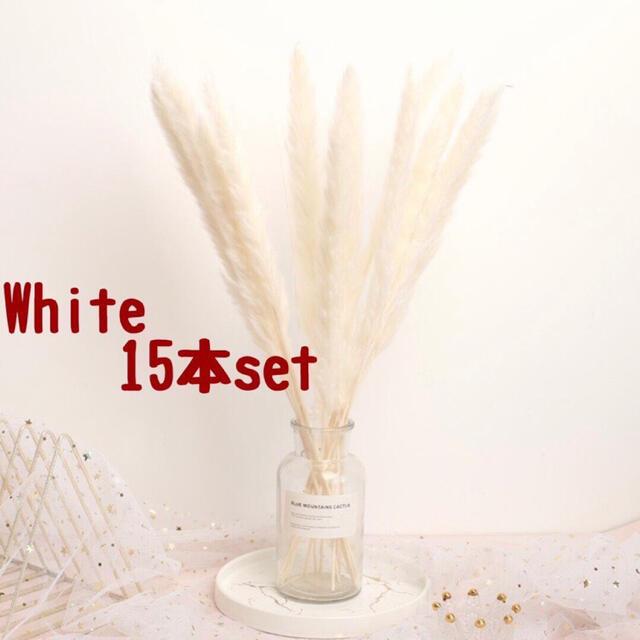 パンパスグラス 白10本 モカ5本 ミックス ドライフラワー テールリード ハンドメイドのフラワー/ガーデン(ドライフラワー)の商品写真