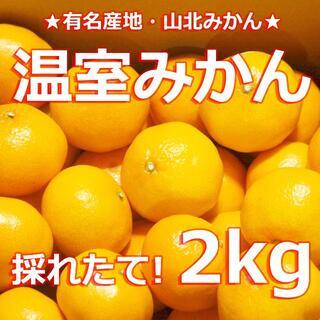 送料無料【 #温室みかん 2キロ #山北みかん 】#みかん #温州みかん 2kg(菓子/デザート)