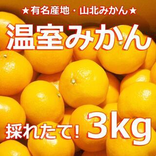 【 #温室みかん 3キロ #山北みかん 】#蜜柑 #みかん #温州みかん 3kg(菓子/デザート)