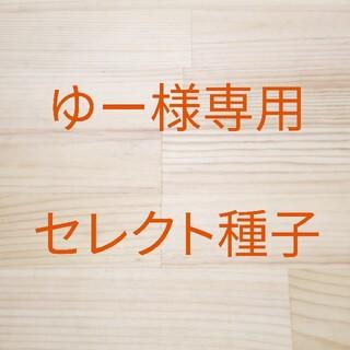 ゆー様専用 セレクト種子 2袋(野菜)