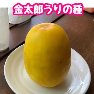 金太郎うりの種 30粒(野菜)