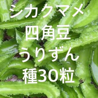 シカクマメ 四角豆 うりずん 種30粒(野菜)