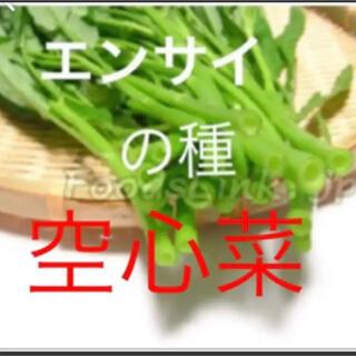 クウシンサイ(空心菜) 野菜の種 30個(野菜)