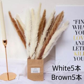 パンパスグラス ホワイト5本ブラウン5本(ドライフラワー)