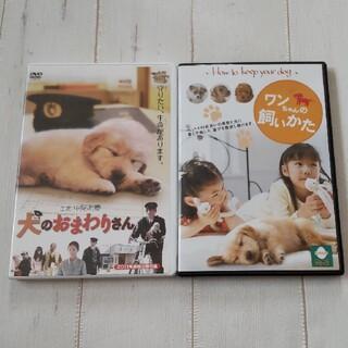 ワンちゃんの飼い方 犬 のおまわりさん DVD 犬の飼い方 中尾明慶(趣味/実用)