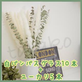 ユーカリ ×5本 + パンパスグラス 白7本+モカ3本 ドライフラワー セット(ドライフラワー)