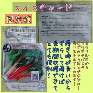 スイスチャード colorful MIX 固定種 野菜の種 種子 種 家庭菜園向(野菜)
