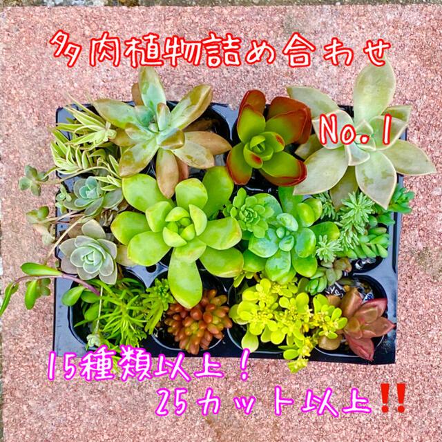 多肉植物 カット苗詰め合わせ♡15種以上❗️25カット以上‼️No.1 ハンドメイドのフラワー/ガーデン(その他)の商品写真