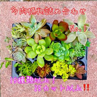 多肉植物 カット苗詰め合わせ♡15種以上❗️25カット以上‼️No.1(その他)