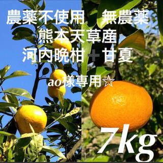 ao様専用☆農薬不使用 甘夏3.5kg➕河内晩柑3.5kg  計7kg 天草産(フルーツ)