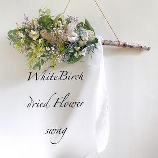 ドライフラワー White Birch 白樺 スワッグ 横長スワッグ(ドライフラワー)
