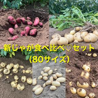 新じゃが食べ比べ♡セット(80サイズ)(野菜)