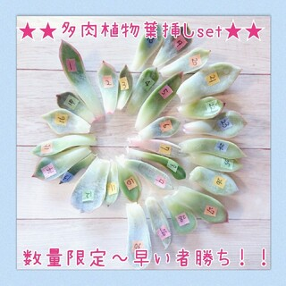 ❤️多肉植物葉挿しセット❤️(その他)