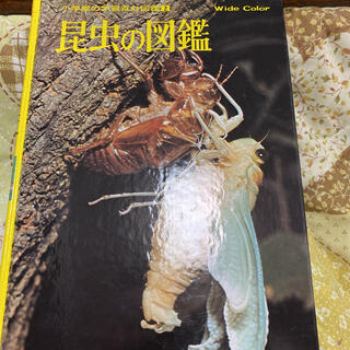 ショウガクカン(小学館)の昆虫の図鑑(その他)