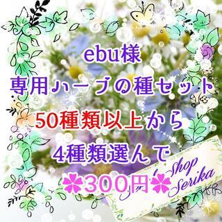 ebu様専用 ハーブの種セット 家庭菜園 野菜(その他)