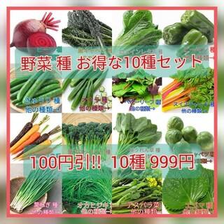 野菜種☆10種セット アスパラ菜 芽キャベツ オカヒジキ ビタミン菜 わさび菜(野菜)