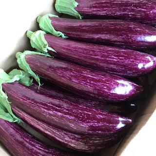 ブランド茄子【りんごあめ】ゼブラ茄子 〜日本一の鮮やかな紫〜(野菜)
