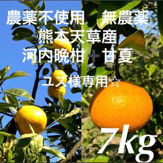 ユズ様専用☆農薬不使用 甘夏3.5kg➕河内晩柑3.5kg  計7kg 天草産(フルーツ)