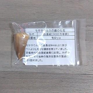 ポケモン(ポケモン)のモササウルス 歯の化石(その他)