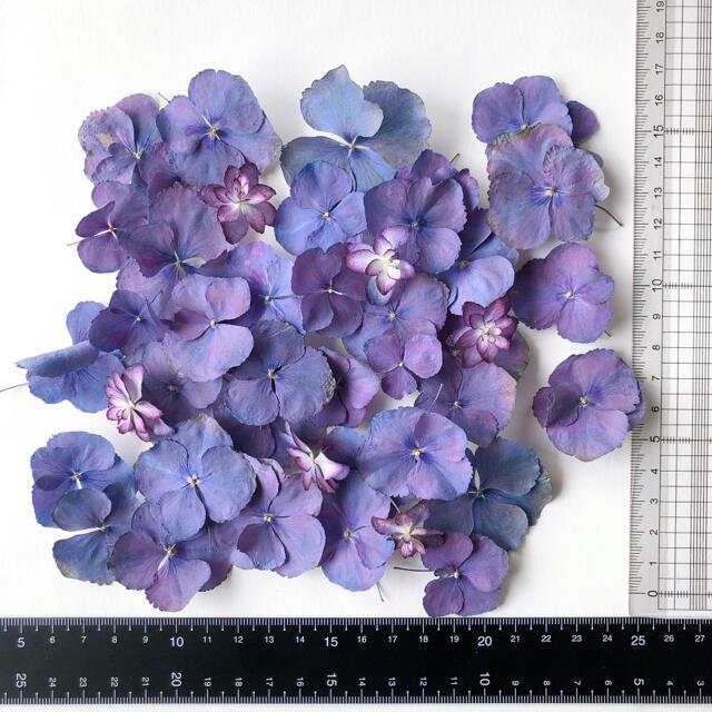 トロ様 専用ページ ハンドメイドのフラワー/ガーデン(ドライフラワー)の商品写真