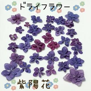 紫陽花パープルブルードライフラワーNo.①(ドライフラワー)