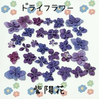 ドライフラワー紫陽花パープルブルーNo.②(ドライフラワー)