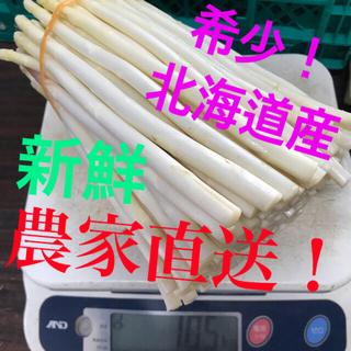 希少!北海道産 ホワイトアスパラ 500g(野菜)