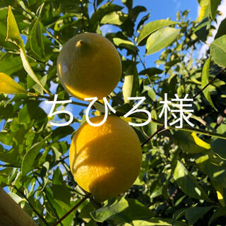 国産 広島県産 無農薬 レモン ちひろ様専用品(フルーツ)