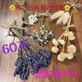 イングリッシュラベンダーと花材のセット(ドライフラワー)