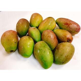 本日限定!沖縄産マンゴー(摘果マンゴー)10kg 野菜用!(フルーツ)