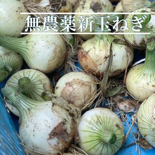 徳島県産無農薬新玉ねぎ10kg(野菜)