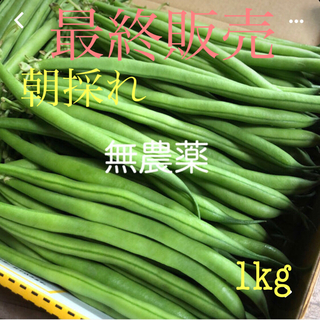 農家直送!朝採れインゲン豆《きせら》1kg(野菜)