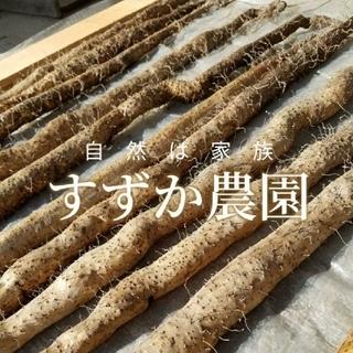 photononohana様専用自然薯~1キログラム~(野菜)