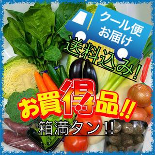 クール便配送‼️新鮮野菜詰め合わせ75サイズ箱満タン‼️(野菜)