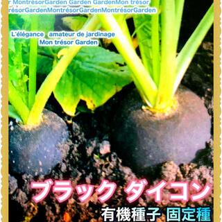 10粒 ブラック大根【野放し・手間いらず】種(野菜)