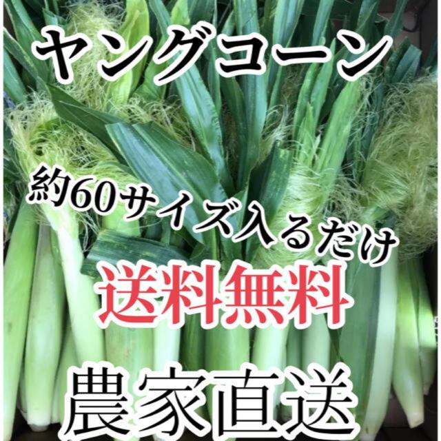 ちぃたん様専用2箱 食品/飲料/酒の食品(野菜)の商品写真