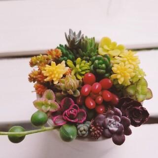 18種類☆多肉植物☆強い品種(その他)