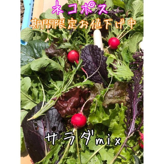 サラダmix 野菜 詰め合わせ ネコポス 直送 食品/飲料/酒の食品(野菜)の商品写真
