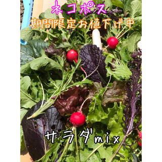 サラダmix 野菜 詰め合わせ ネコポス 直送(野菜)
