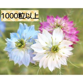 ニゲラ 種 ミックス 1000粒以上(その他)